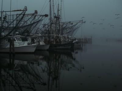 Fog in the bay