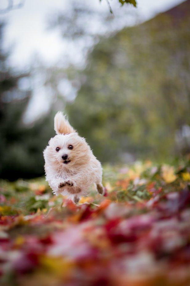 Flying Doggo by kiwisphotography - Dogs In Action Photo Contest