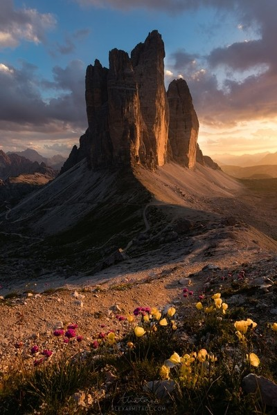 Summer Bloom in the Dolomites