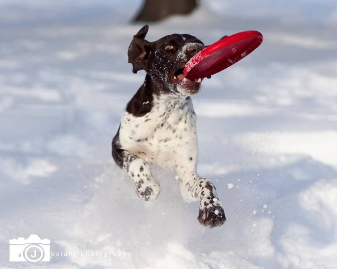 Snow Day by josiahj - Dogs In Action Photo Contest