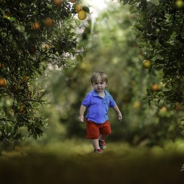 {Jax} In the Orange Orchard