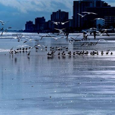Seagull Chaos
