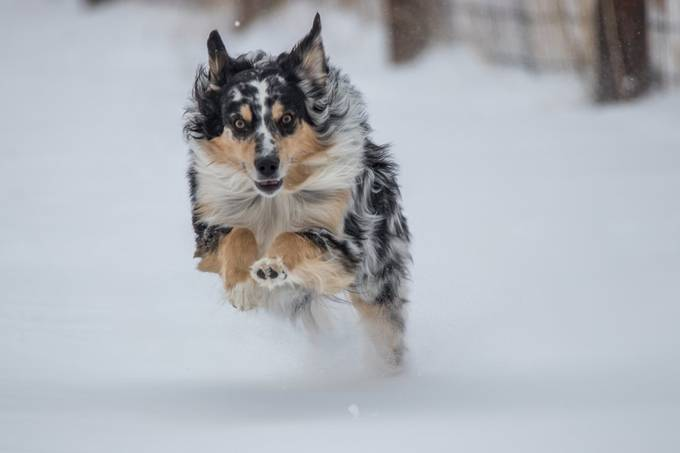 Snow Day by Just4FunPhotos - Dogs In Action Photo Contest