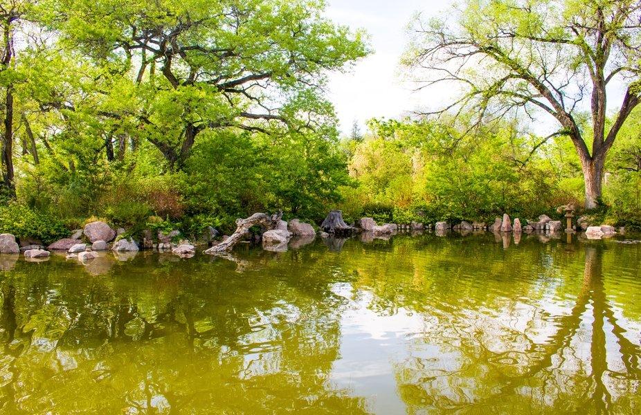 The Lake. Beautiful Coyfish lake at the Japanese Garden exhibit at the ABQ biopark Botanical Gard...