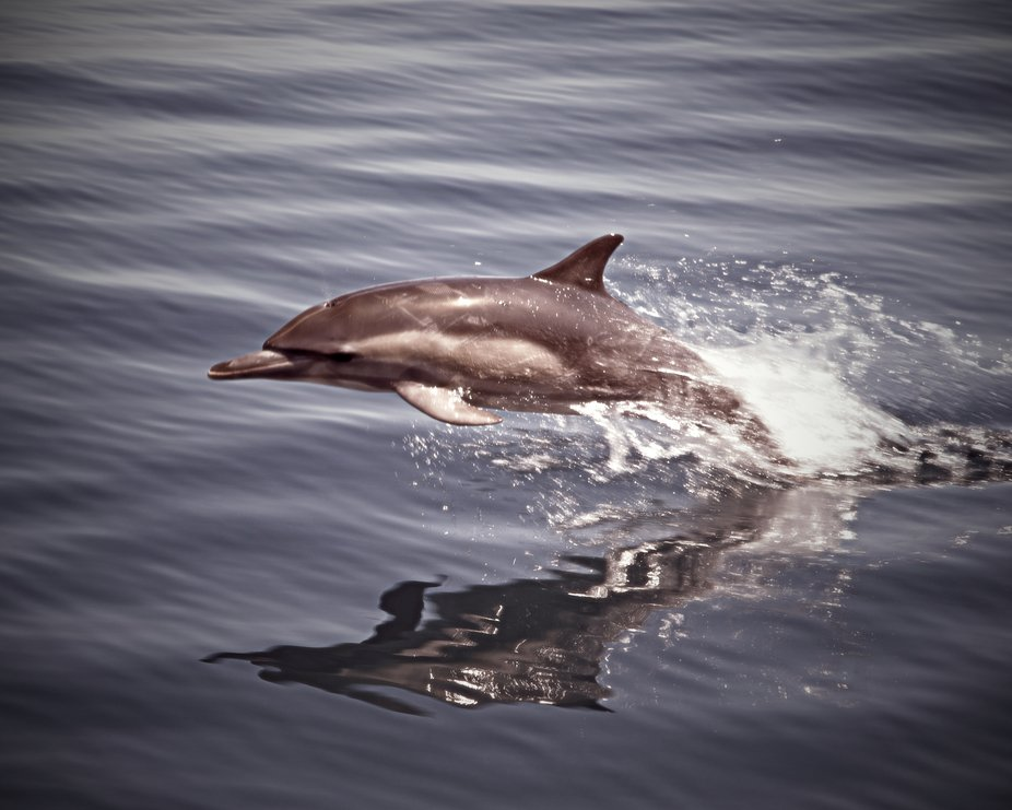 Shot on a whale watching cruise off San Diego
