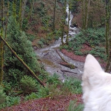 Mowgli's Adventures - in the Nanoose rainforests on Vancouver Island - Jan 5, 2019