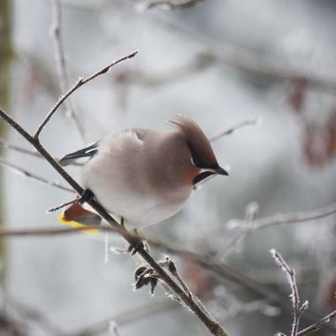 Winter is beautiful time. I have been feeding birds in my backyard for couple of years now. So i have seen many of birds there so far. But there is no so many backyard ones than these.
