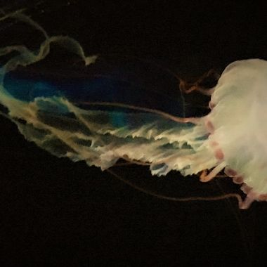 the color of Jellyfish