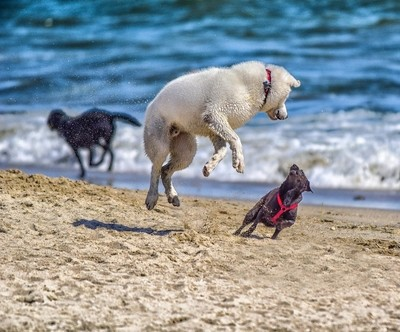 Dogs Playing on the Sand   Watch Out