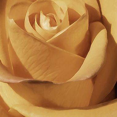 Rose dipinte di arancione