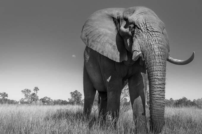 by ronconigliaro - Animals In Monochrome Photo Contest
