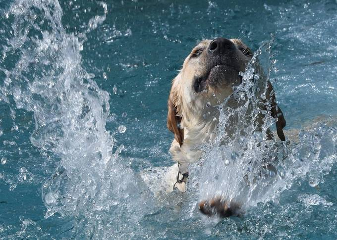Gypsy's splash by reflectionsbyrenee - Dogs In Action Photo Contest