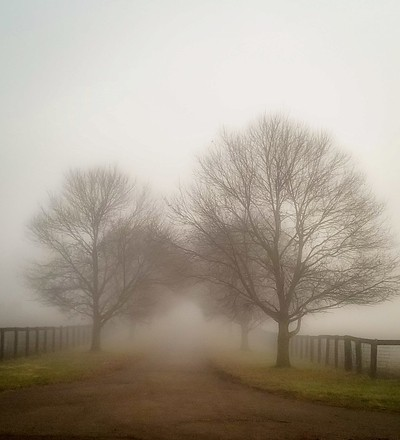 Lost in the Mist.....