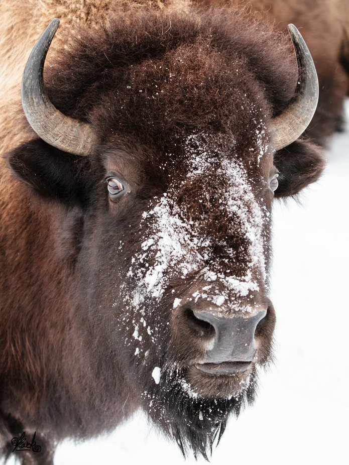 SnowNose by fotosdenada - Image Of The Month Photo Contest Vol 42
