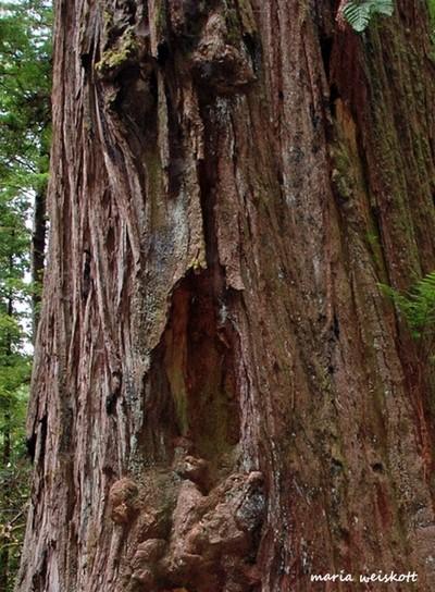Surprised Tree