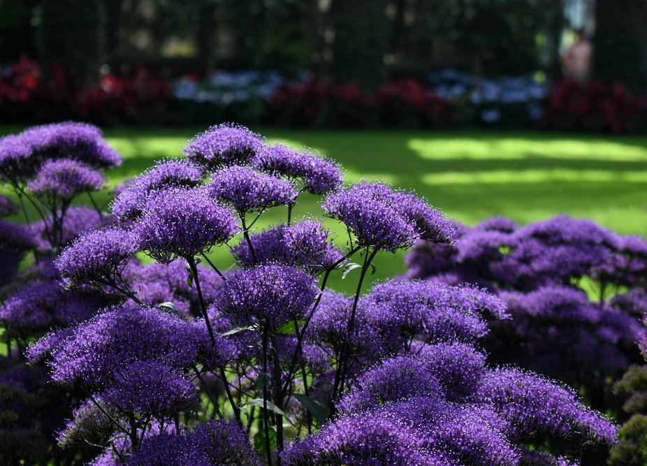 Some gorgeous purple flowers I saw in the conservatory at Longwood Gardens.