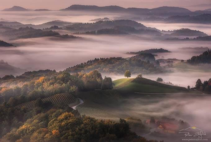 Morning light by saintek - Monthly Pro Photo Contest Vol 48