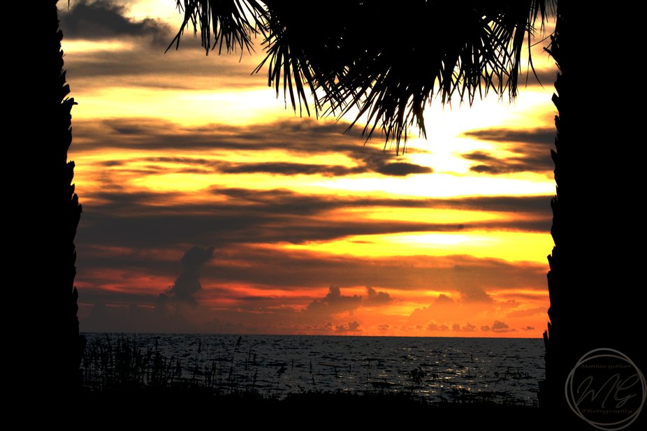 sunset after storm between two palm trees.