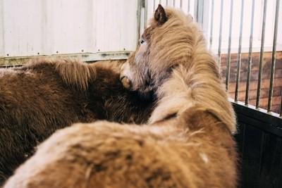 Animals can Hug too