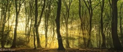 Sunbeams in a springtime forest