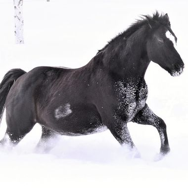 A friend's horse enjoying a run in the deep snow! Nikon D3400 18-55mm lens light vignette
