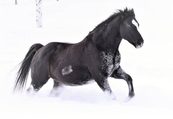A friend's horse enjoying a run in the deep snow! Nikon D3400 18-55mm lens light vignette