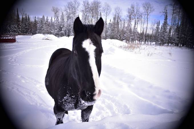Nice frosty day, great day to contrast a friends horse playing in the snow! Nikon D3400 18-55 lens dark vignette Taken will standing on a snowbank above him