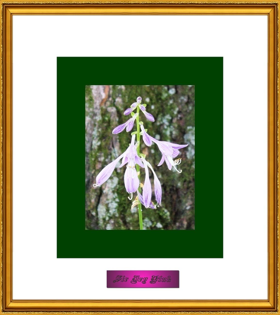 Flower Art 7 of 9