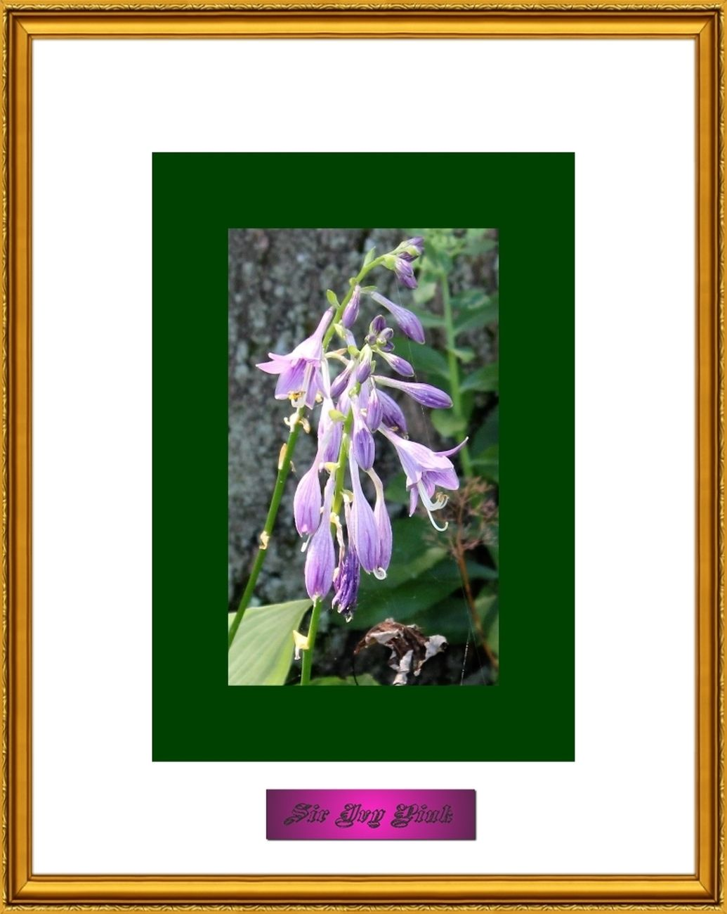 Flower Art 8 of 9