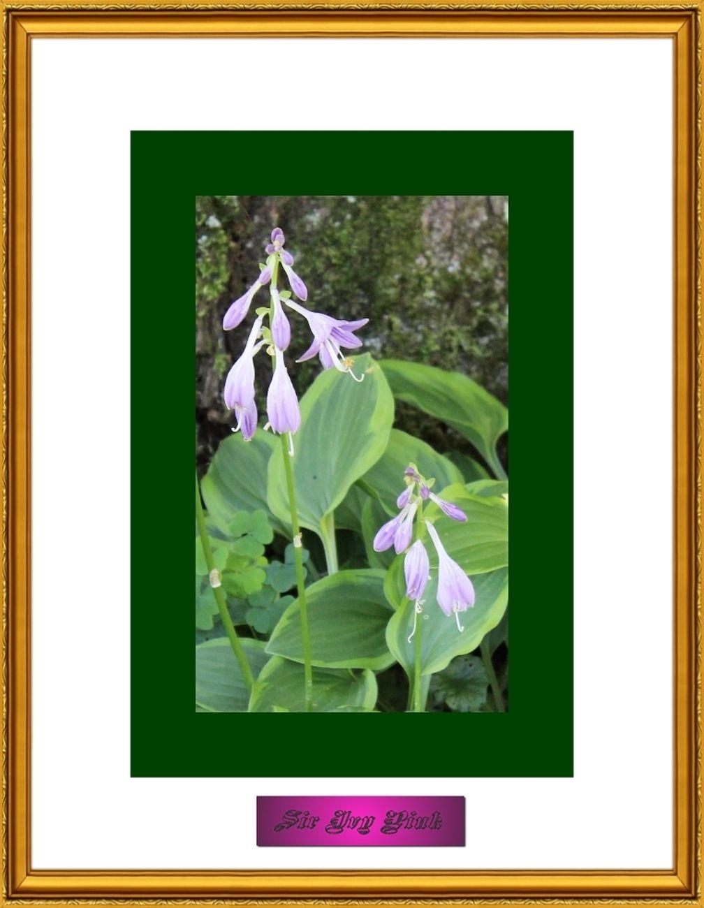 Flower Art 9 of 9