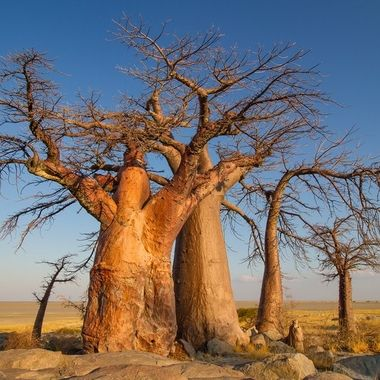 Remarkable trees around the world