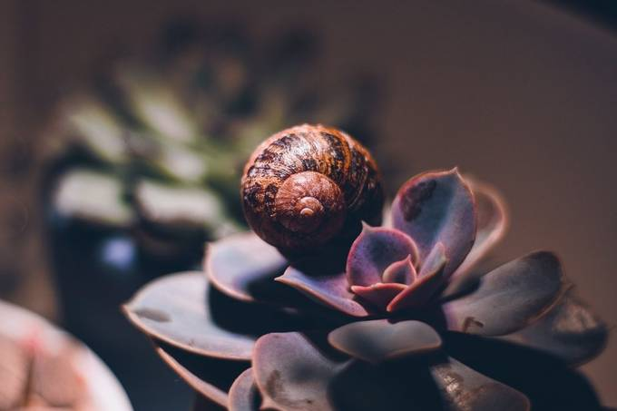 Succulent and snail by Ellie_88 - Image Of The Month Photo Contest Vol 42