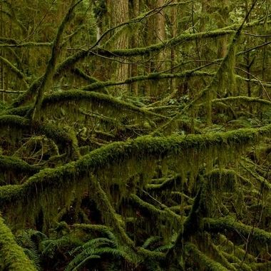 Dr Seus Tree, Lynn Canyon