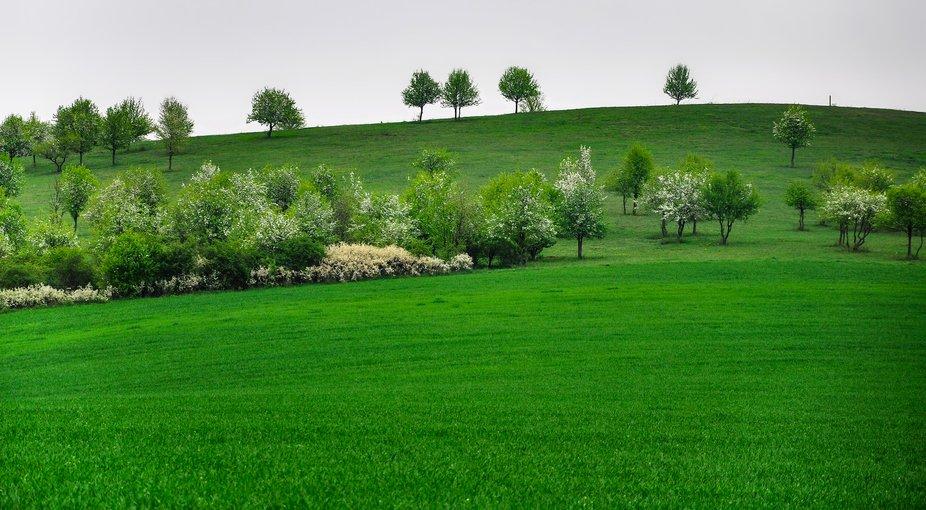 Green wonder