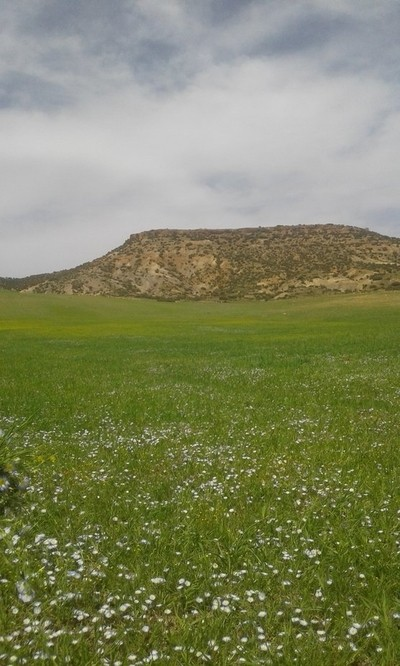 Kaf alkat kherbat siouf. Derrag. Medea of Algeria