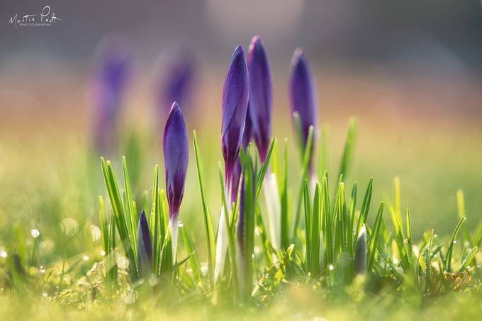 Spring by martinpodt - Colorful Macro Photo Contest
