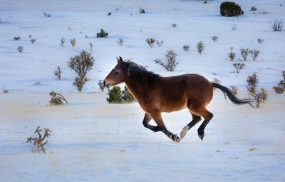 Mustang Runner