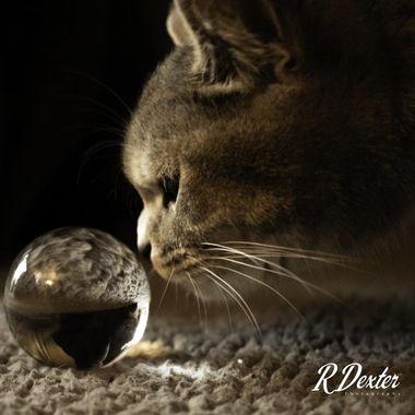 Feline Curiosity