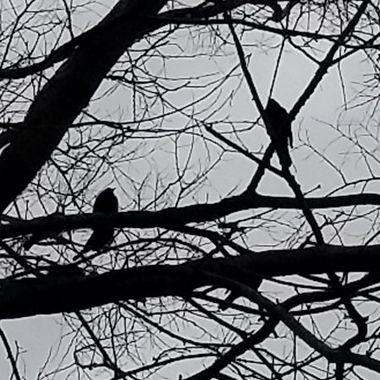 The bird has a friend