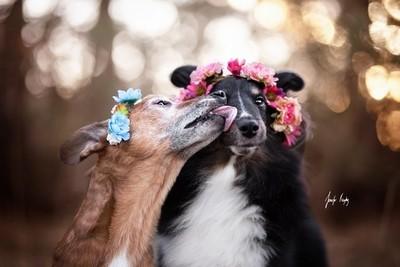 Just kiss!