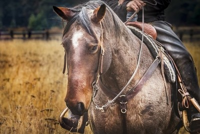 """""""No hour of life is wasted that is spent in the saddle."""""""