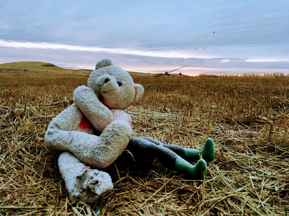 These two stuffed animals were found in a hayfield in this position. I take their picture almost ...