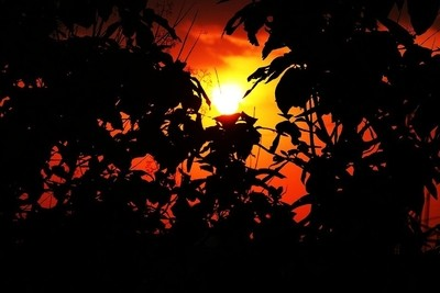 Beaty of Sunset with tree leaves