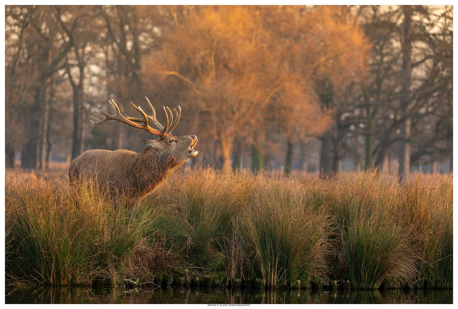 Calling All Hinds - Adding the environment to a wildlife subject can often improve the whole outl...