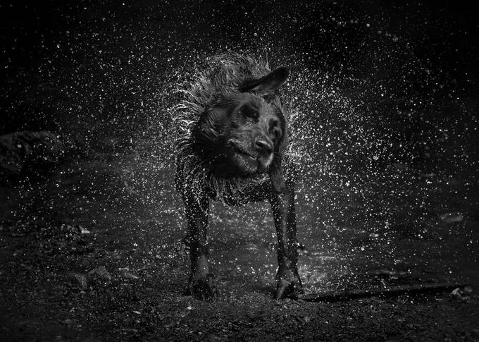 Shakey Beth by Lucekaboose - Dogs In Action Photo Contest