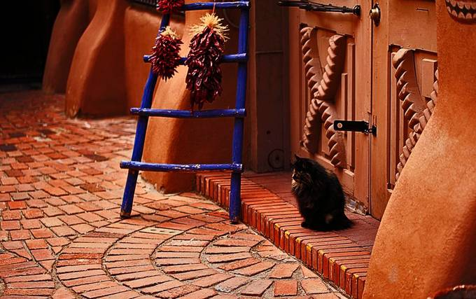 Old Town Albuquerque, NM.  Found this cat chilling in the alley outside one of the local shops