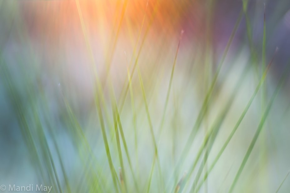 The sun shines down on green grass in this unique in-camera double exposure. The colorful sun fla...