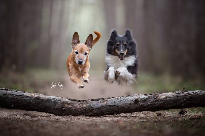 Just Jump! by hadissima - Dogs In Action Photo Contest