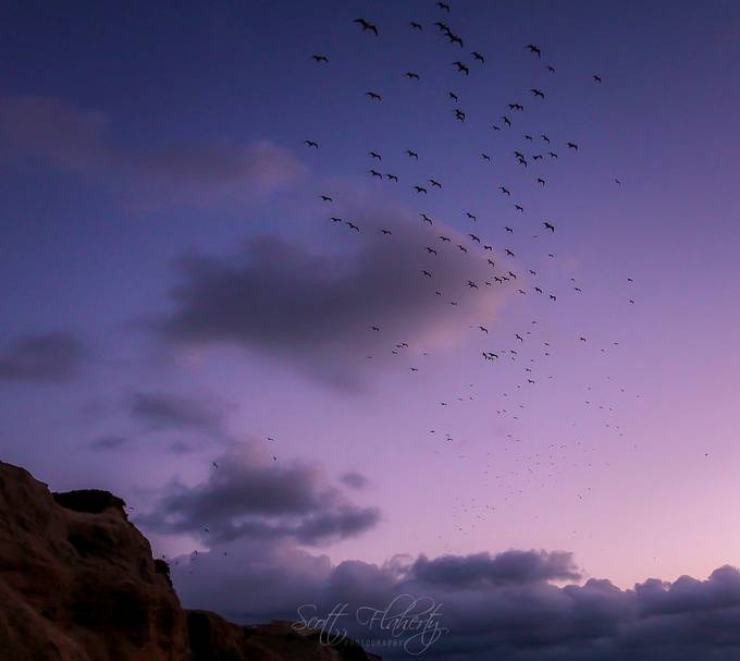 Evening Lift Off  by misterscott - Shades Of Purple Project