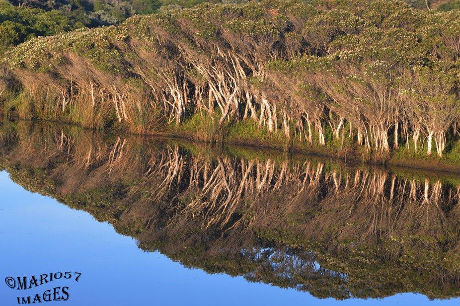 Tidal River,Morning Reflection